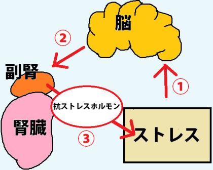 副腎疲労症候群の仕組み