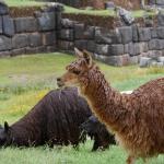ペルー・ボリビアの旅 その10【6日目】クスコ