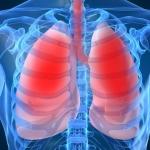 脂肪は息を吐くときに排出されてることが判明→肺は脂肪の排泄器官(オーストラリア研究)