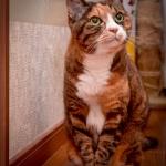 ストロボ使って猫写真
