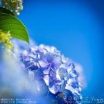 紫色した太陽の花 (Instagram)