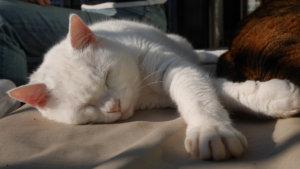 お猫さま14歳にして、初の外デビュー