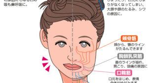 小顔整体・小顔矯正って効果あるの?→引き締まっただけ!!