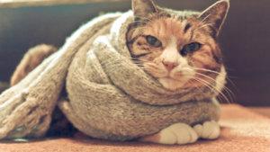 マフラー大好き猫