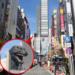 TOHOシネマズ新宿が4/17にオープンしたみたいよ!!
